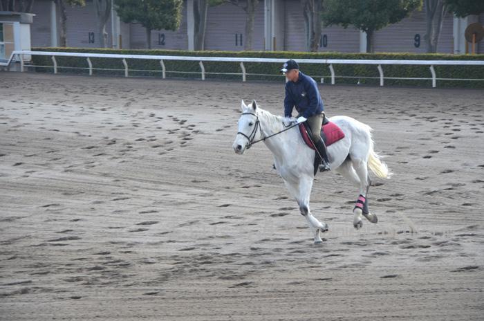 白馬が走る