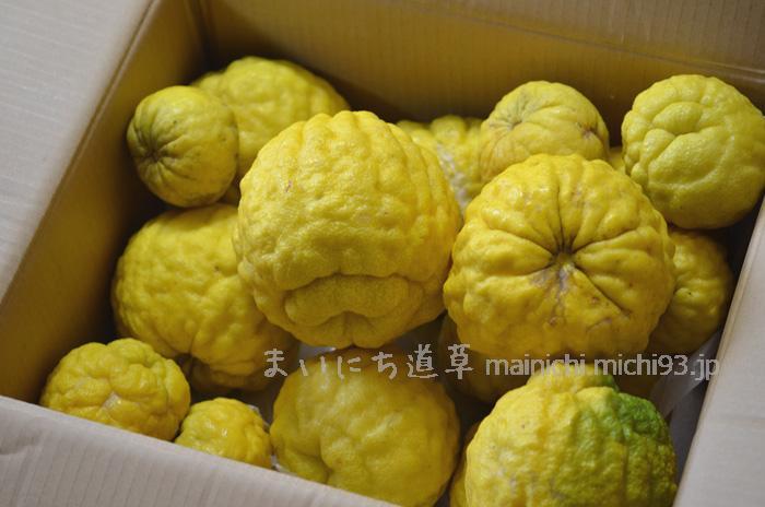 巨大な柑橘!鬼ゆず(獅子ゆず)が香川から届く