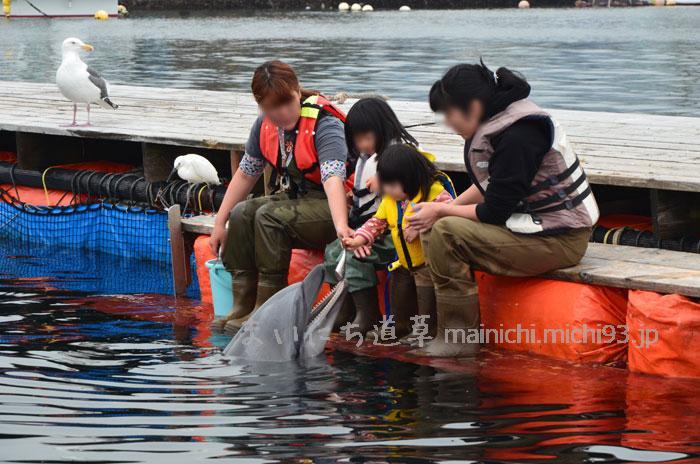 イルカにエサやり