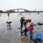千葉の木更津海岸(中の島公園)で潮干狩り
