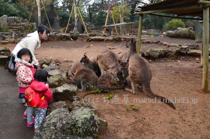 檻のない動物園