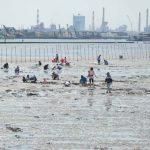 2016年も東京湾・木更津海岸で潮干狩り、アサリが大漁だよ!