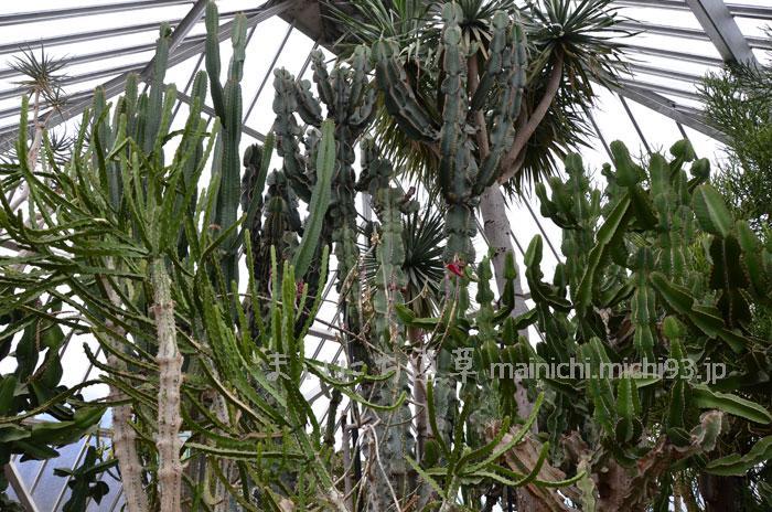 サボテンジャングル