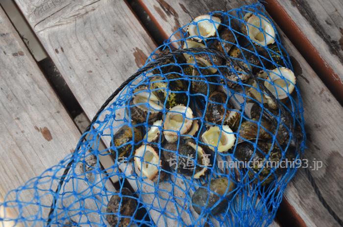 磯でとった貝